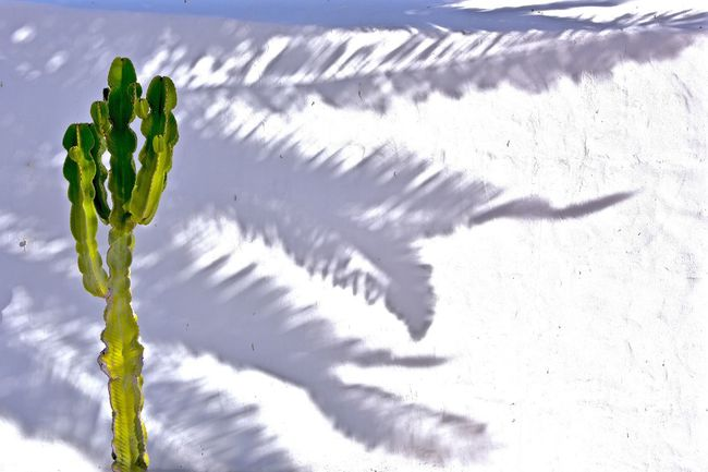 Cactus, Shadows, White Wall, Lanzarote-Canarias Fine Art Photography