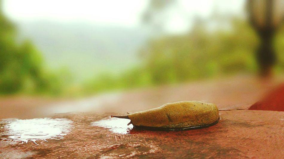 A Quiet Slug at Kudremukh Mountain Ranges ...