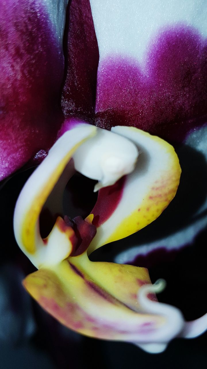 close-up, freshness, food, food and drink, no people, nature, flower, indoors, healthy eating, beauty in nature, day