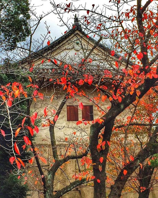 Another picture from the castle grounds . Wish everyone a lovely , successful, happy 👍🏼 day 🌹🌷💞😀 Nature Naturelover Travel Autumn HDR Love Beautiful Picture Ig_today Natureaddict Insta Instagram Igaddict Ig_week Igers Rsa_nature Amazing Ig_myshot Likes Ig_daily Awesome Loveit Worldbestgram Insta_worldz Ig_week holiday japan osaka globalcapture trees