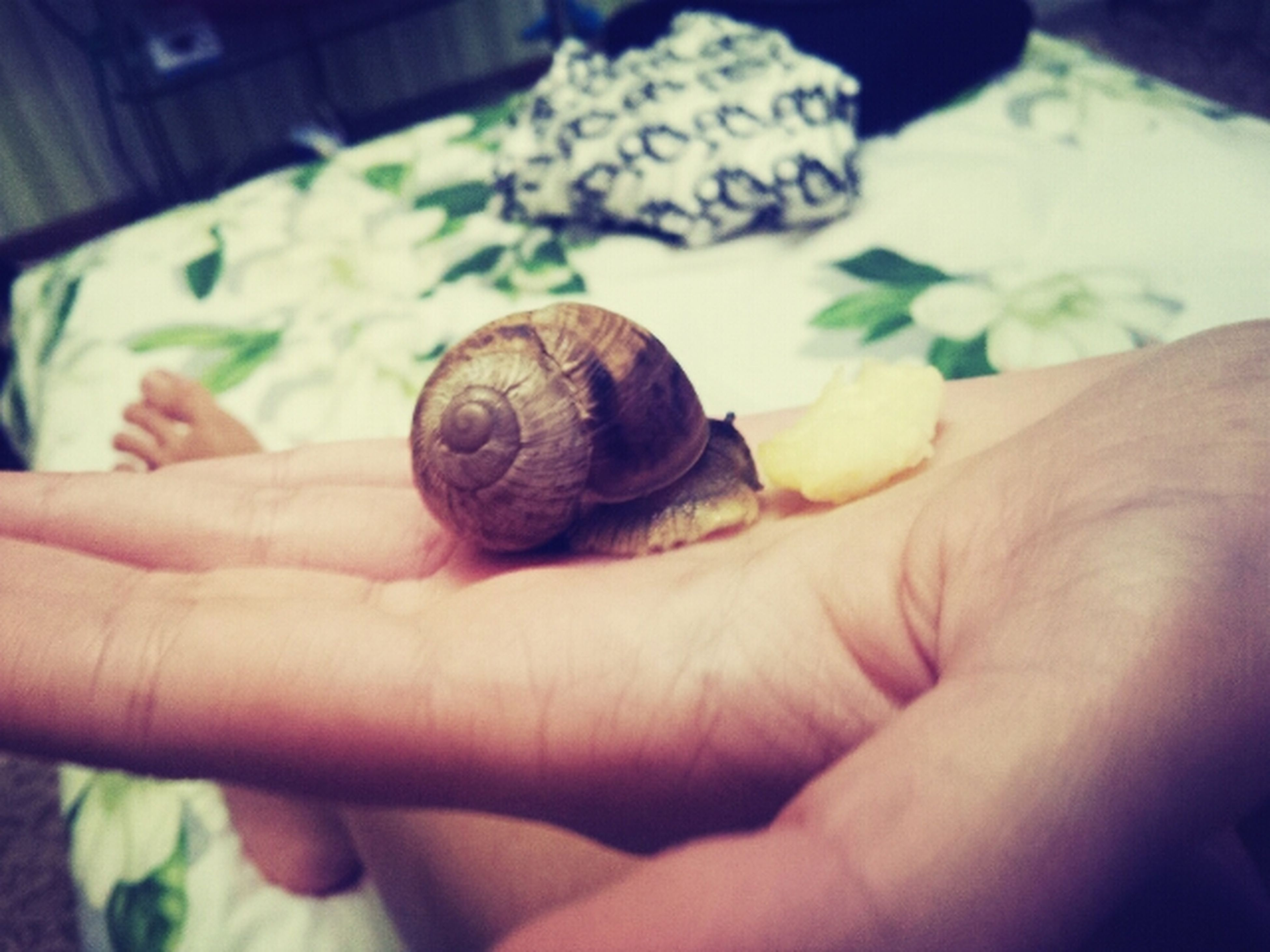 person, holding, human finger, part of, cropped, animal themes, close-up, unrecognizable person, wildlife, animals in the wild, one animal, focus on foreground, animal shell, indoors, lifestyles, men, snail