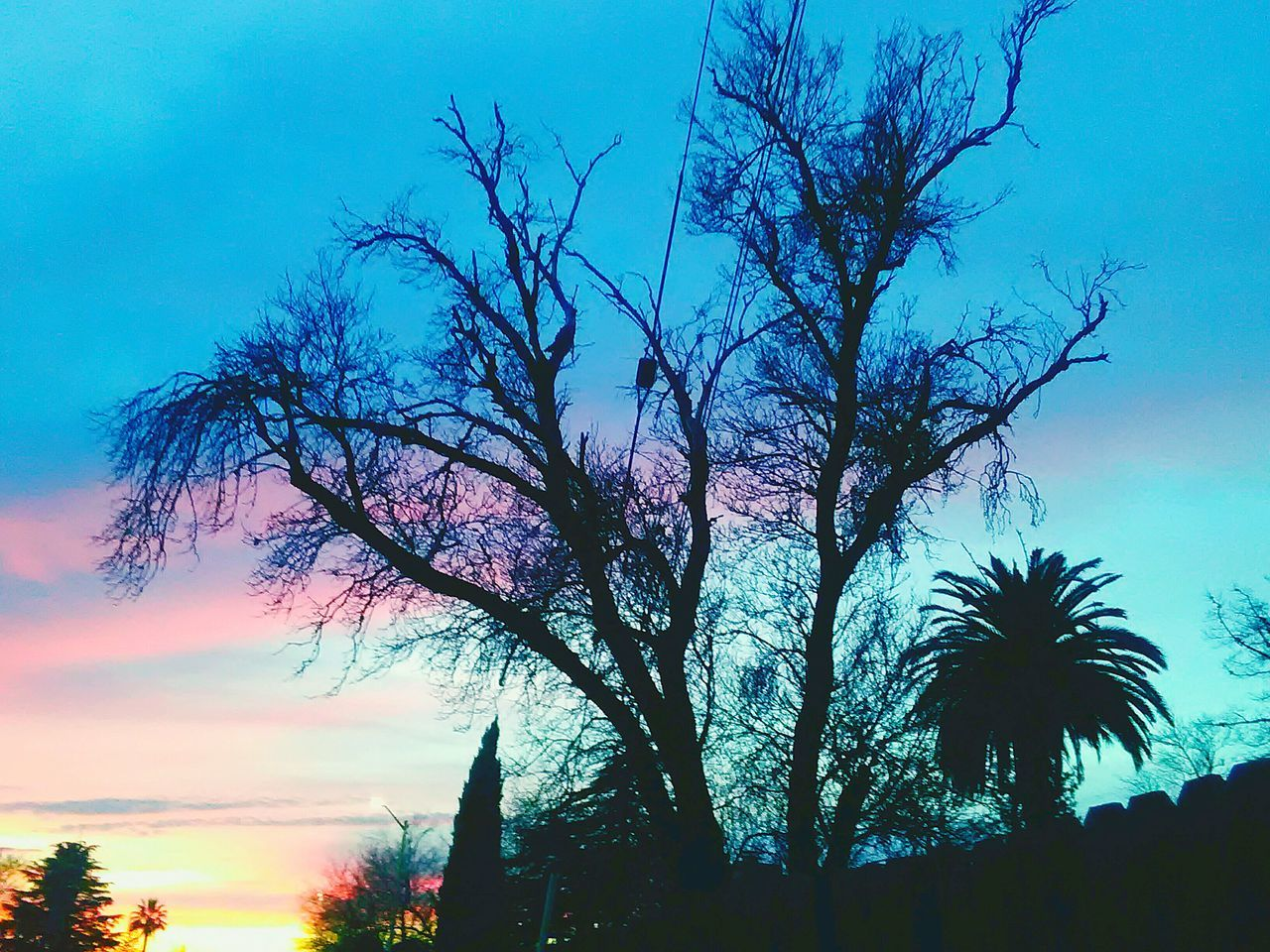 tree, silhouette, sky, low angle view, beauty in nature, nature, no people, scenics, growth, tree trunk, tranquility, outdoors, sunset, palm tree, branch, day