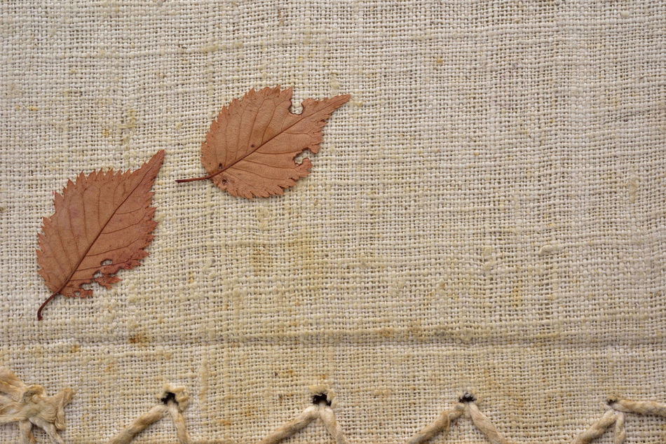Animal Themes Architecture Autumn Background Blank Built Structure Change Close-up Cloth Creative Day Design Dry Full Graphics Leaf Leaves Lines Manufacture Manufacturer Nature No People Outdoors Style Warmth
