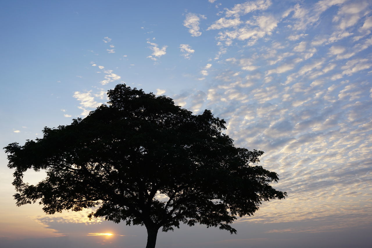 Nature Tree Sky Beauty In Nature Single Tree Sunset Cloud - Sky Thailand