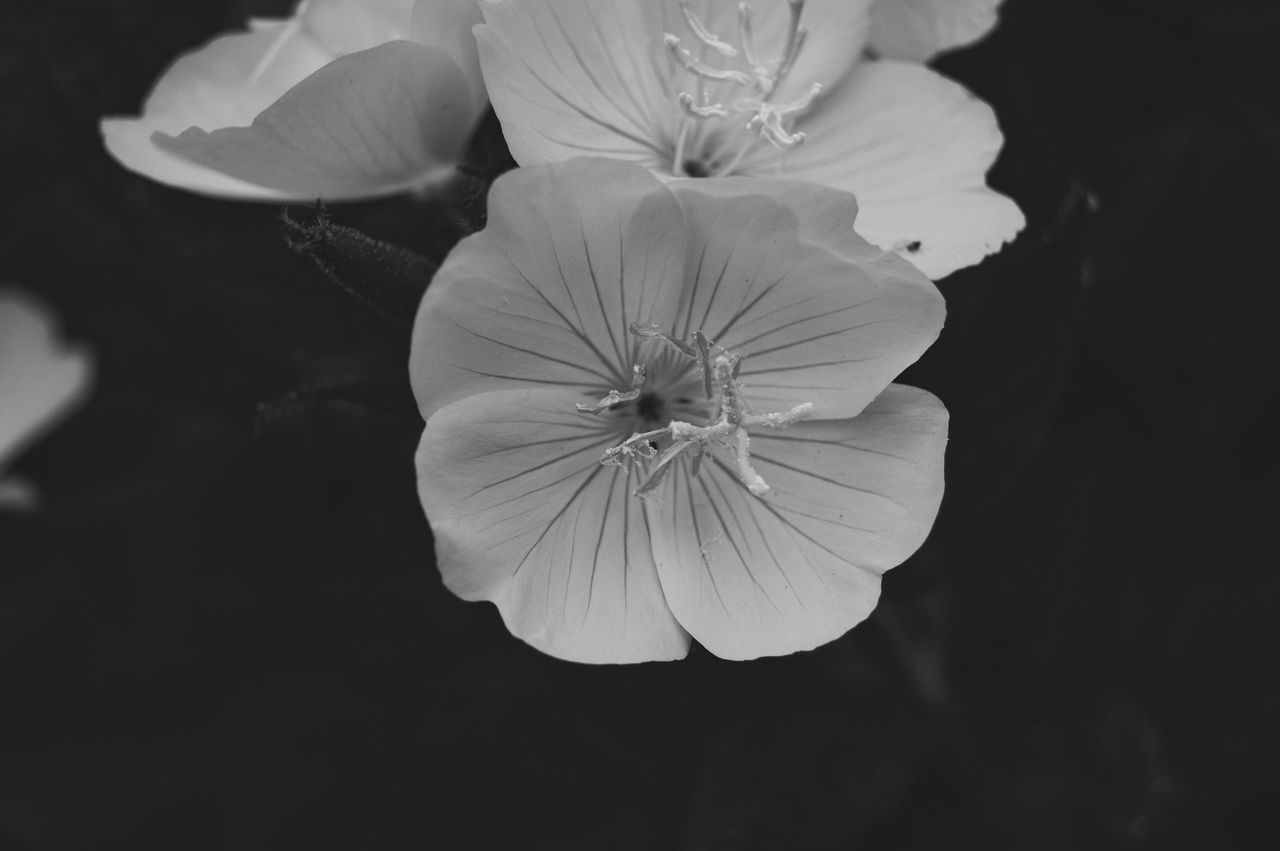Hanging Out Taking Photos Black And White Flower Collection Getting Inspired Flower Porn Black And White Collection  From My Point Of View Black And White Photography EyeEm Best Shots EyeEm Gallery Eye4photography  Black And White Eyemphotography Showcase June