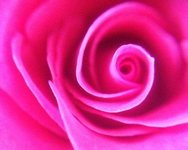 https://youtu.be/CB4EgdpYlnk Hello World Nature Peace Hope Enjoying Life Flower 薔薇 Rosé