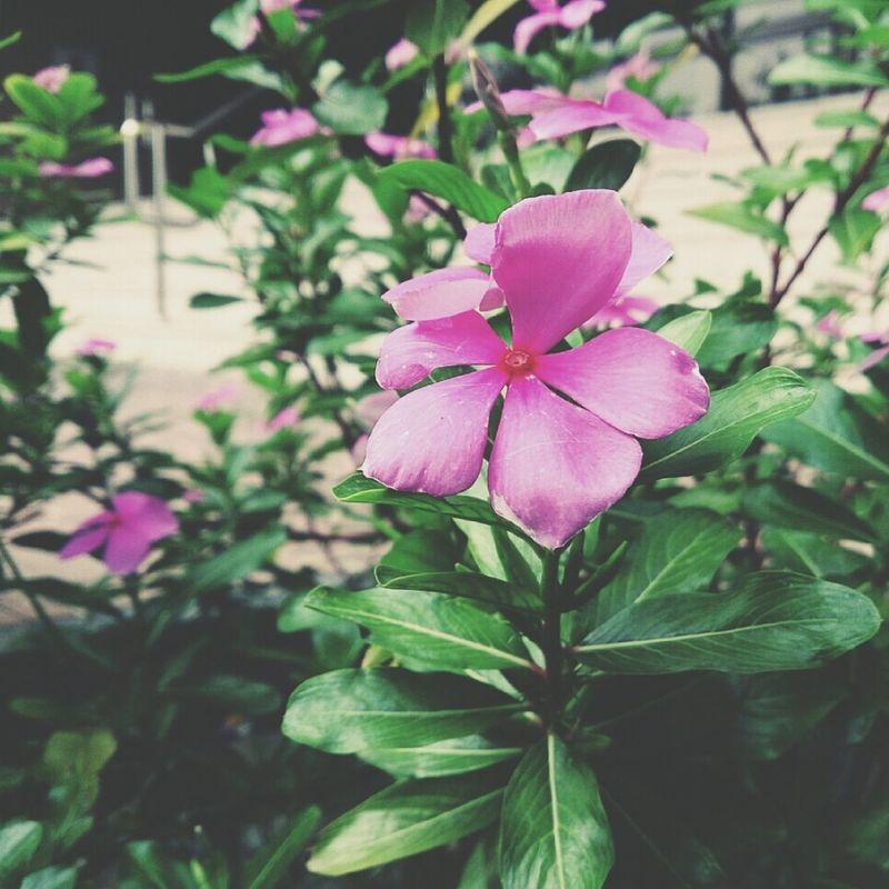الورد الصغير.. محد يلتفت له ?❤