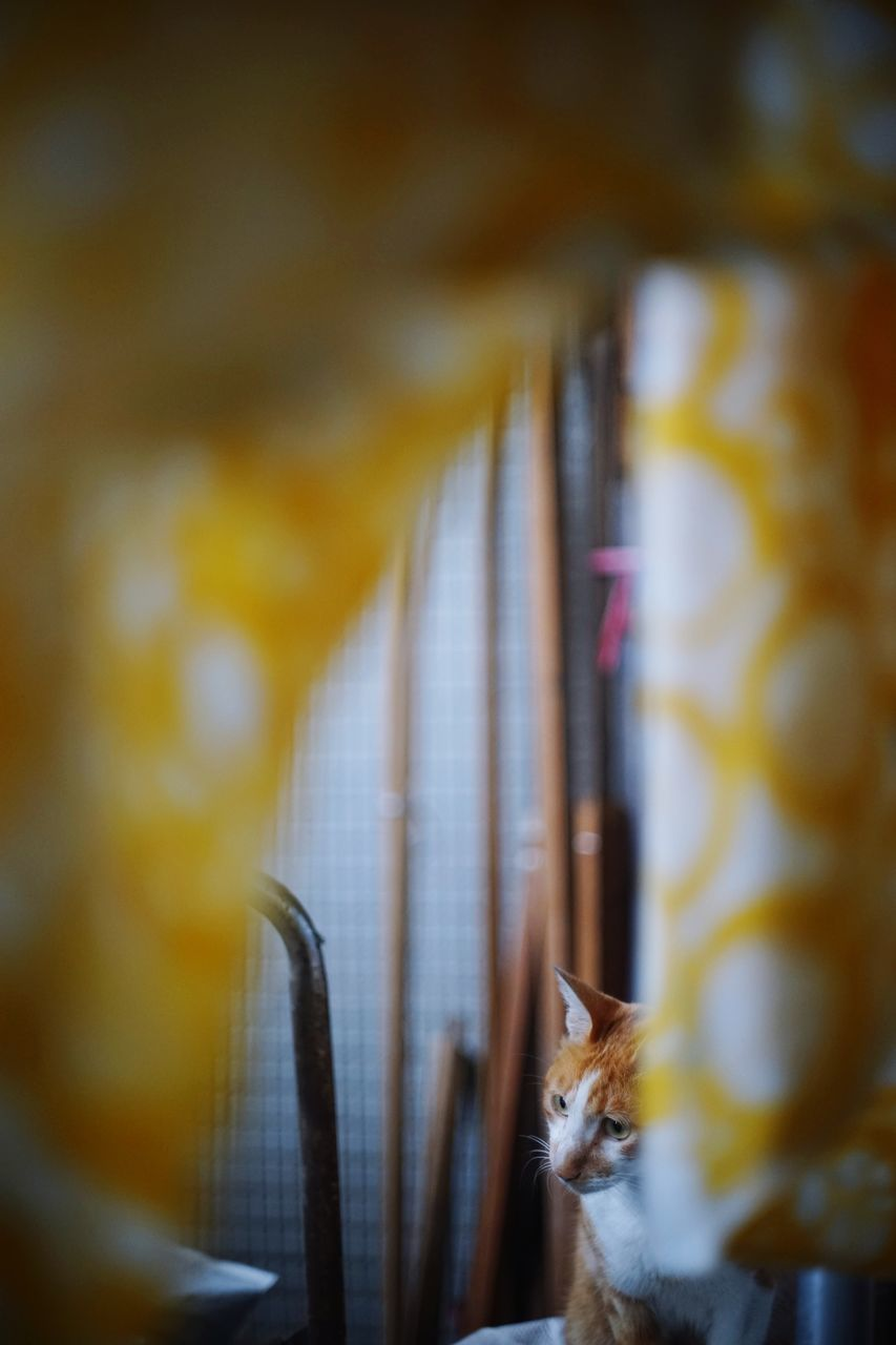 indoors, domestic cat, no people, selective focus, one animal, animal themes, pets, feline, close-up, domestic animals, mammal, yellow, day, nature