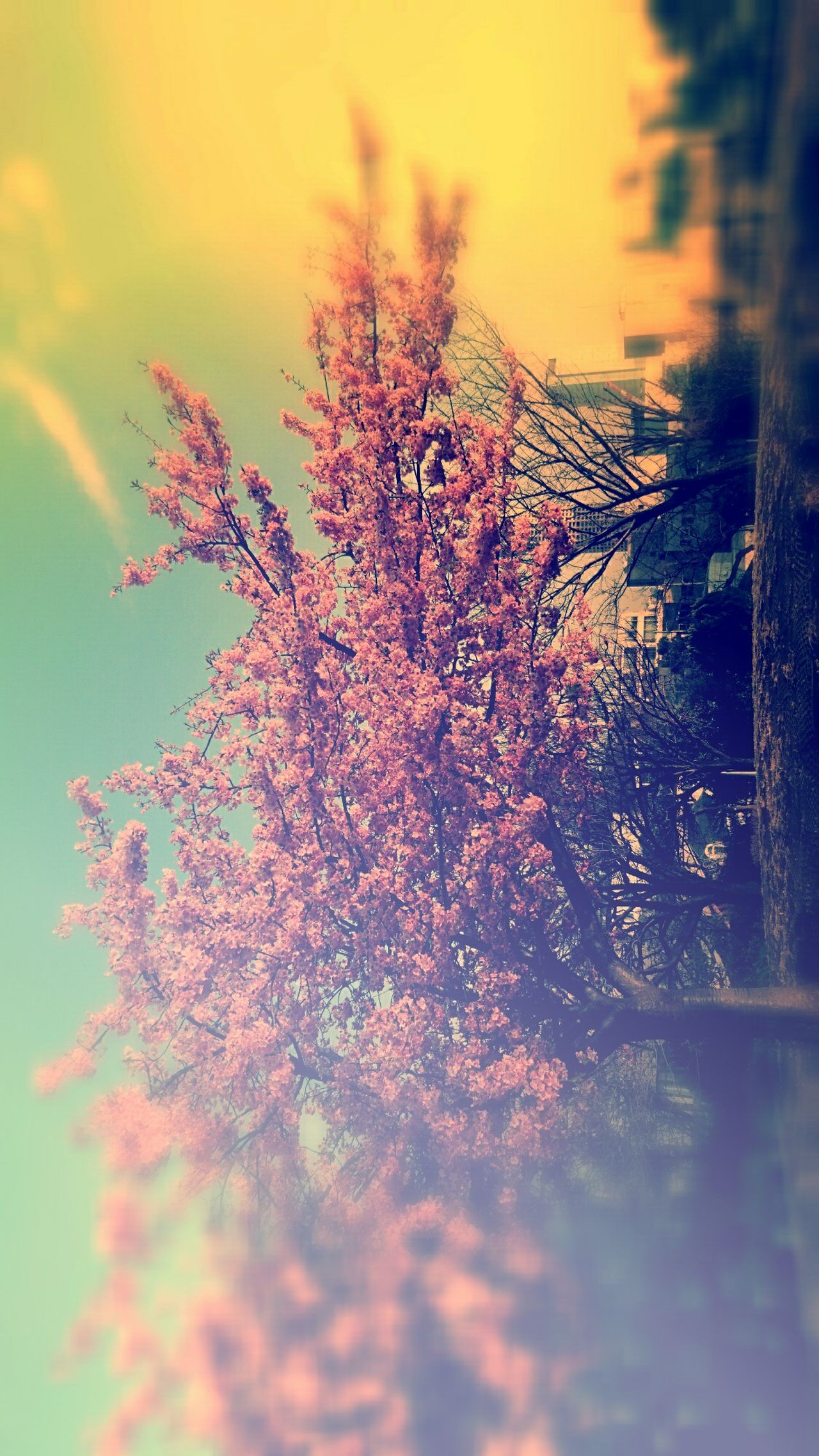 Hello World Spring Urban Spring Fever Quantity Cherry Blossoms Park Nature Photography Flower Flowers Flowerporn Pink Flower Pink Color Palette Skyporn Sky And Clouds Sky And Trees Buildings & Sky Nature's Diversities Maximum Closeness Tokyo Street Photography Tokyo Japan Showcase March