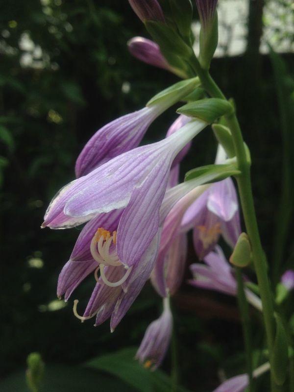 Flower Flowerporn Purple Flower