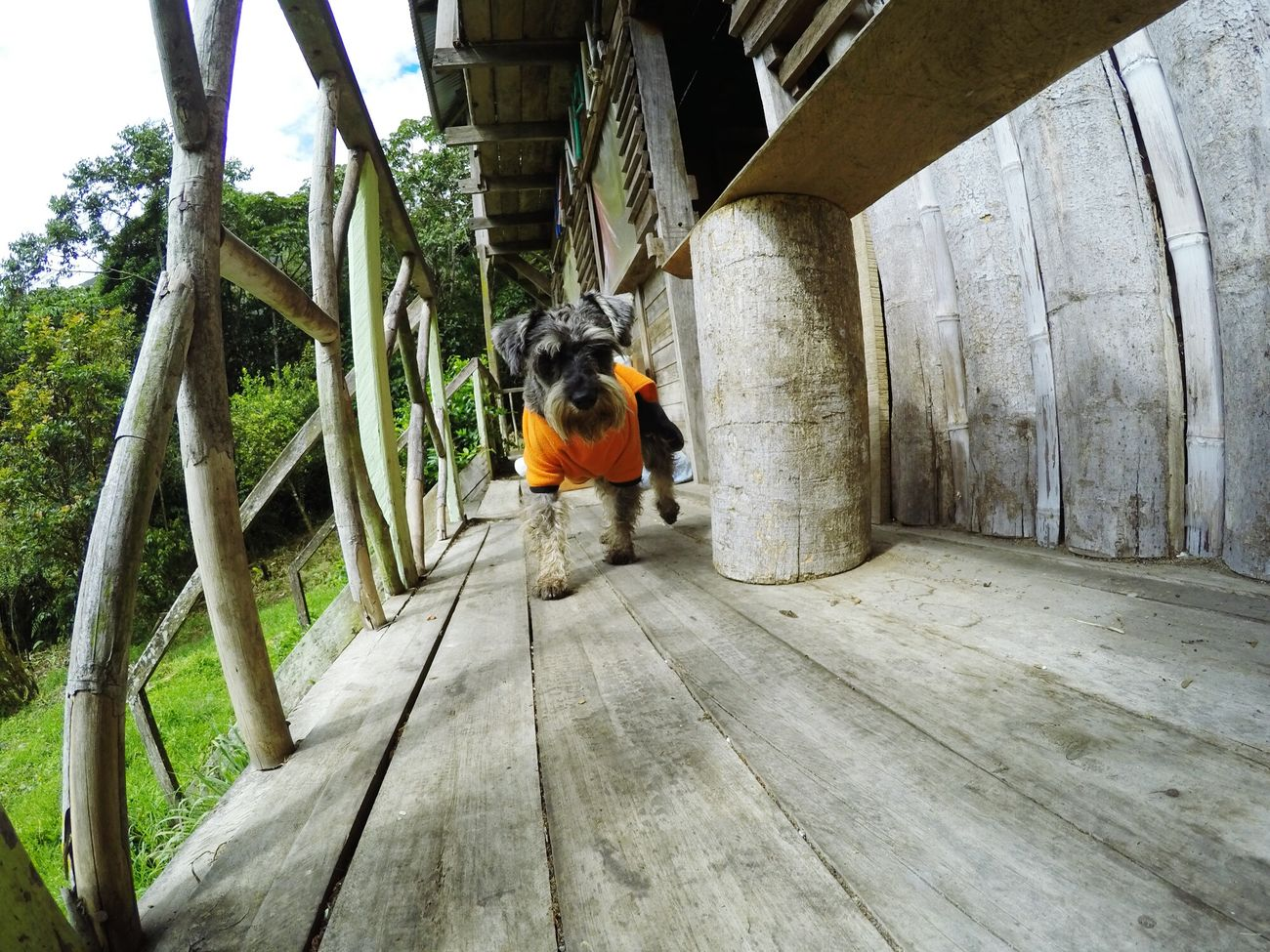 Ricci en la maravillosa Madre Selva, vestido de Goku. Gopro Hero 4