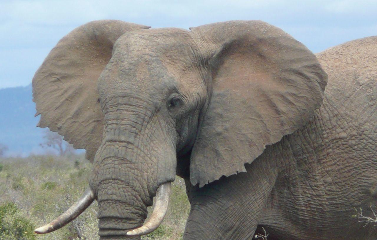 Elephant Landscape #Nature #photography The Art Of Photography Landscape_photography EyeEm Nature Lover Elephant Photography