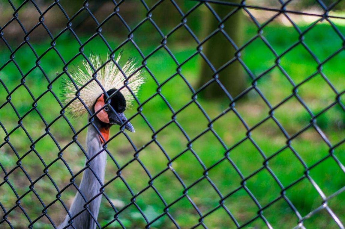 Birds Animals Bird Photography Colour
