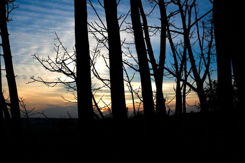 EyeEmNewHere Beauty In Nature Day Forest Forest Fire Growth Landscape Nature No People Outdoors Scenics Silhouette Sky Sunset Tranquil Scene Tranquility Tree Tree Trunk EyeEmNewHere Shades Of Winter