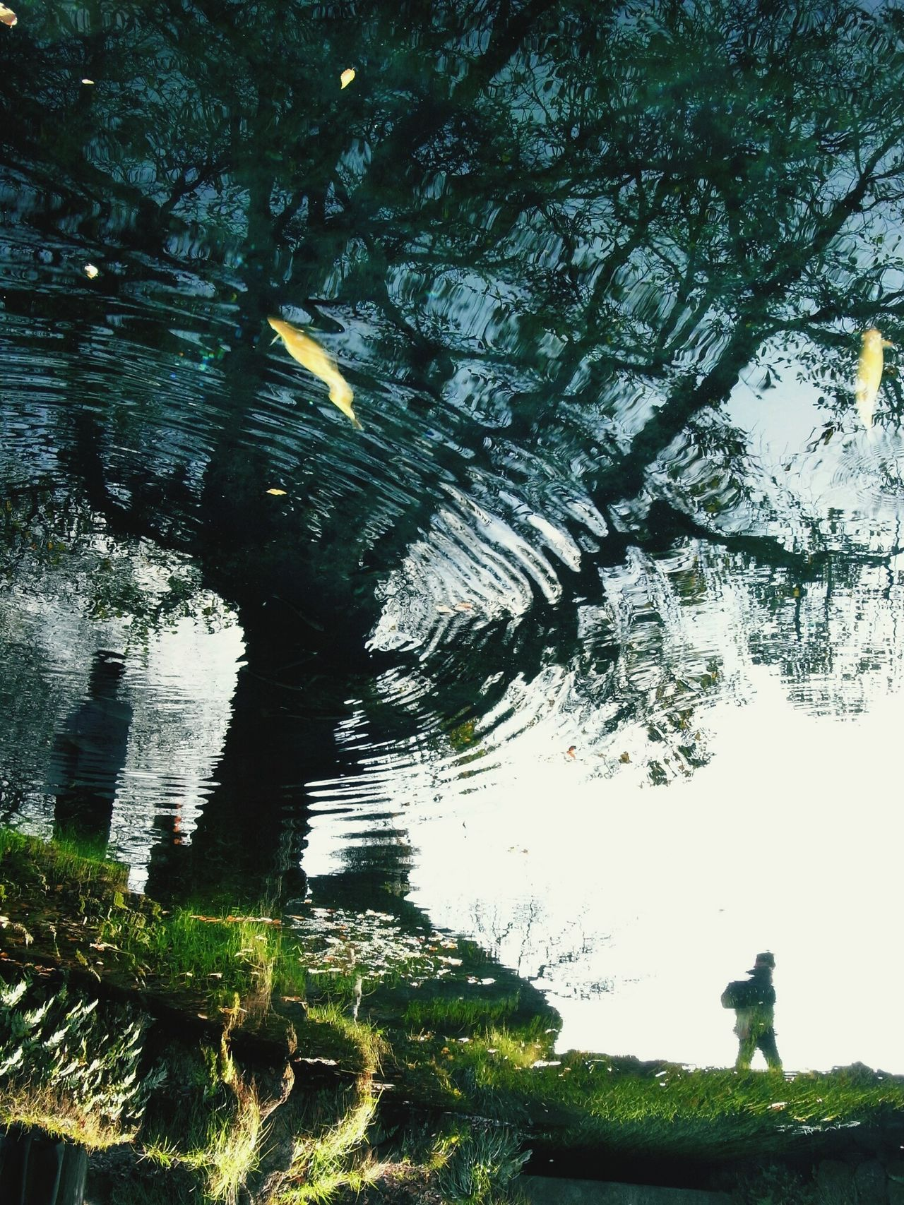 Chance Encounters Tree Nature Beauty In Nature Water Outdoors Japan Mirroring In Water