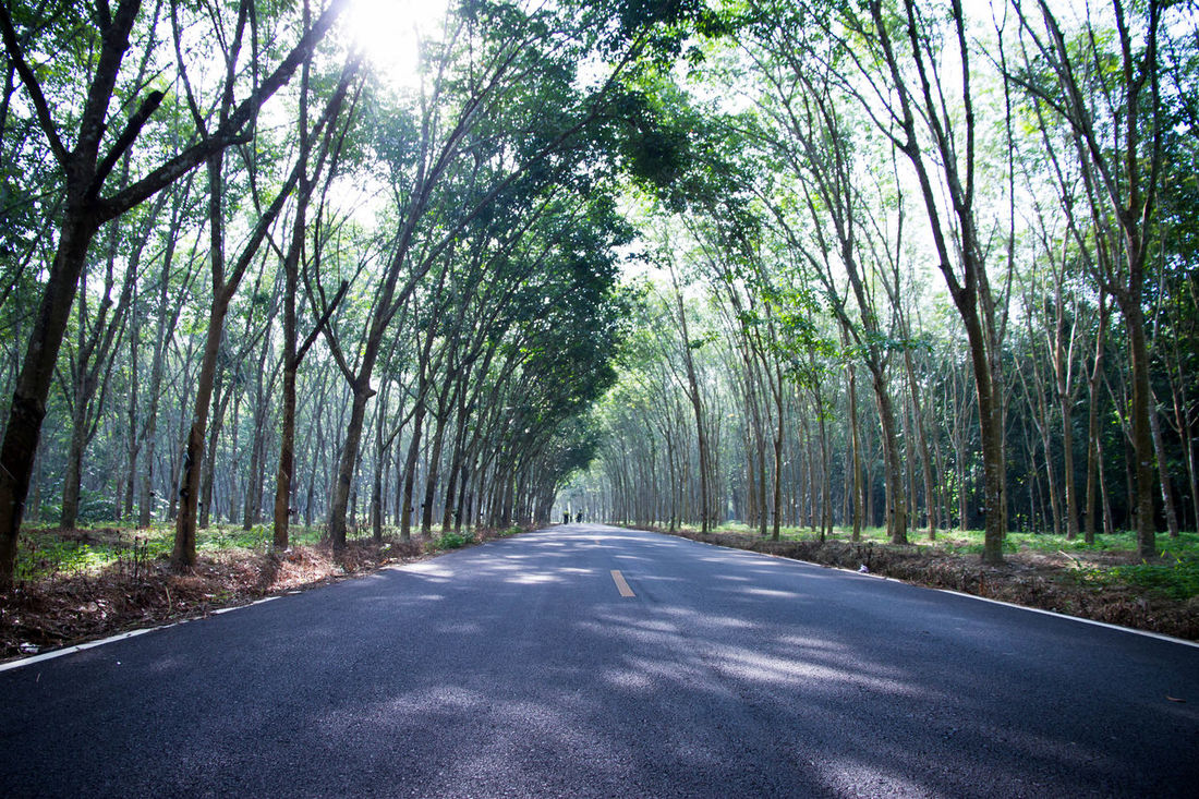 Beauty In Nature Day Diminishing Perspective Forest Green Color Nature No People Outdoors Road Scenics Sky The Way Forward Transportation Tree Rubber Tree Rubber Trees
