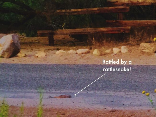 Rattlesnake Rattlesnake Wickenburg Hiking With A Friend Hanging Out Check This Out That's Me Arizona Desert Sunset Desert Beauty