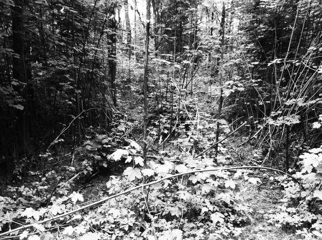Monochrome Nature Blackandwhite Forrest