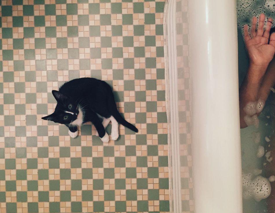 Beautiful stock photos of cat, Animal Themes, Bathroom, Bathtub, Checked Pattern