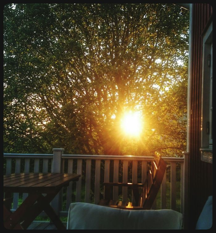 Sunset Hugging A Tree Porch