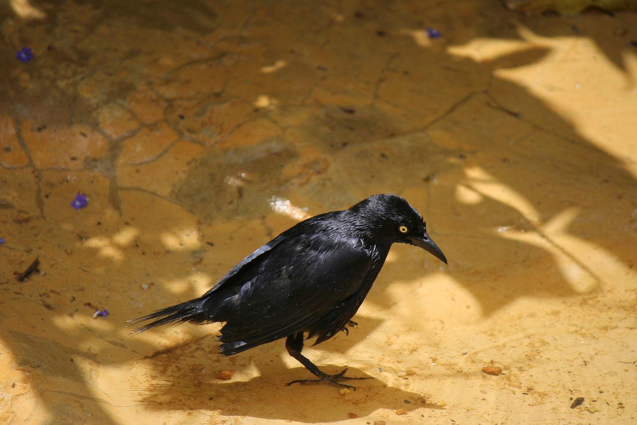 Zoo Animals  Trinidad And Tobago Zoophotography Zoo Photography  Bird Photography Birds🐦⛅ Birds Of EyeEm  Check This Out Emperorvalleyzoo Birdbath