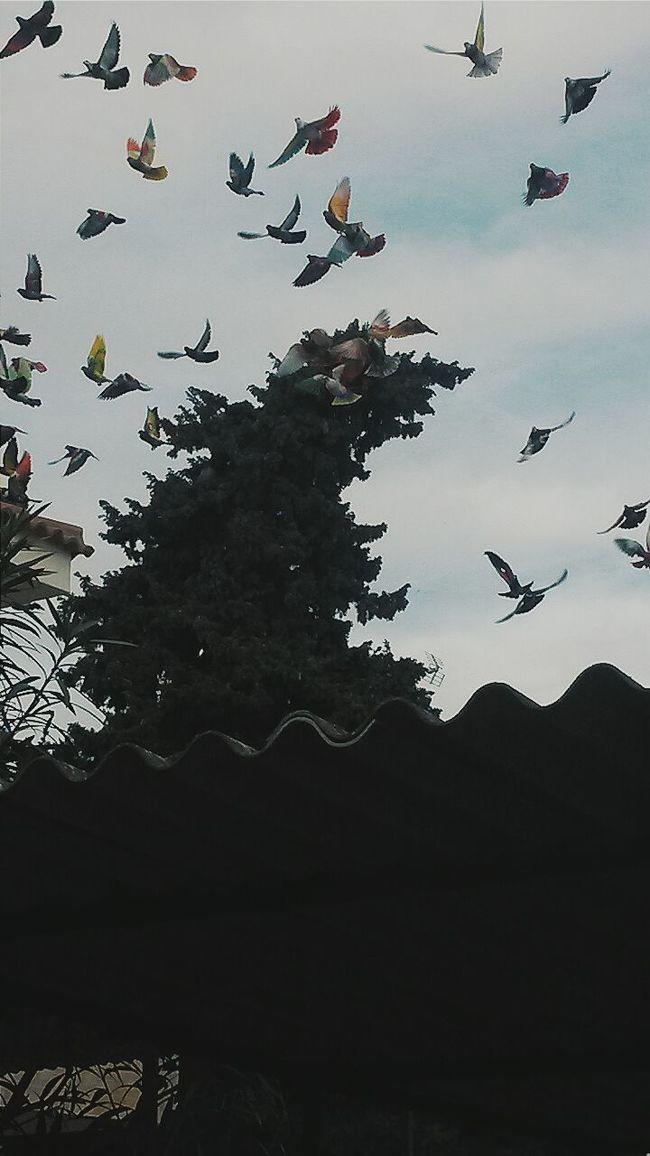 Elcielo Cielo Azul Cielomurcia