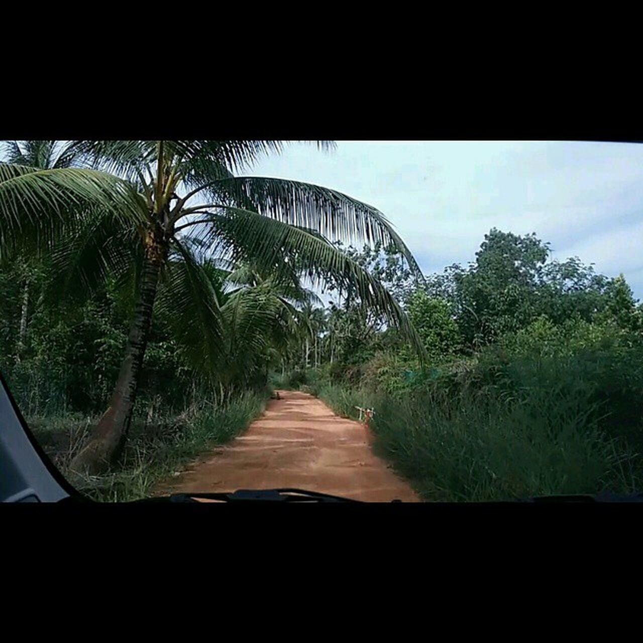 This is how most of the roads were here; Red Earth , full of Potholes (some more than a foot deep!) and wild chickens and dogs walking around. During the day it's kind of fun, but at night the cab ride becomes an adventure! Christmas Vacation Holiday Latergram Rustic Oldschool Backtobasics Greenliving Bintan  INDONESIA Loola Adventure Resort Sunny