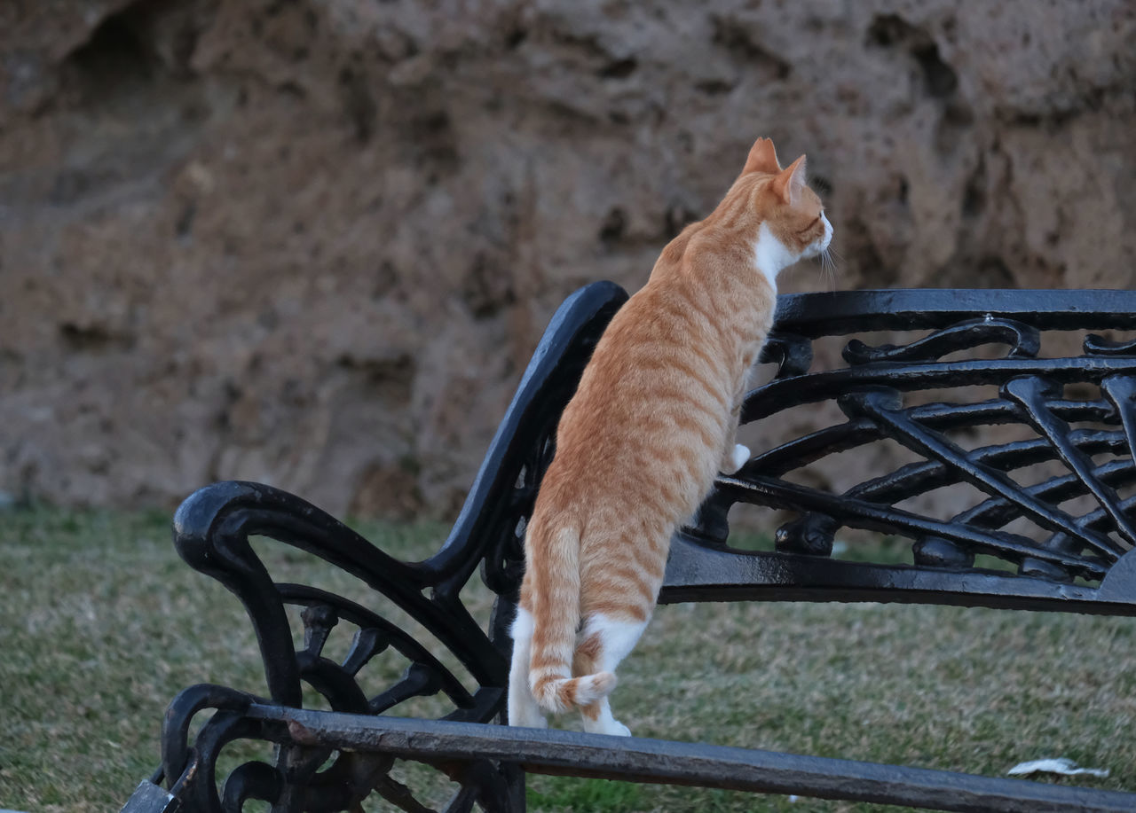 Animal Themes Cat Cat On Bench Cat Standing On Hind Legs Curiosity Day Lurking Mammal Nature No People Observing One Animal Outdoors