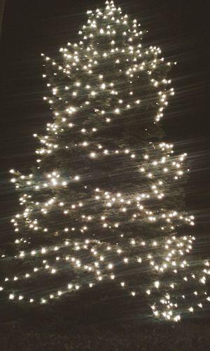 Giga albero Taking Photos Christmas Natale  Christmas Tree Albero Di Natale Lights Luci Enjoying Life