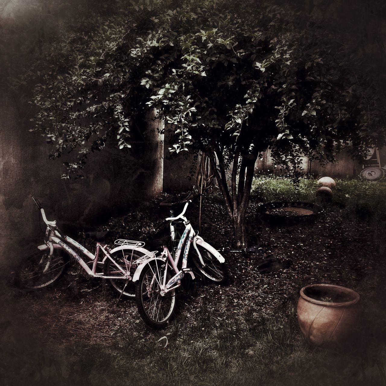 Bikes Tree Nature Growth No People Plant Forest Outdoors Day Memory Memorial Day Plants And Flowers Jardin