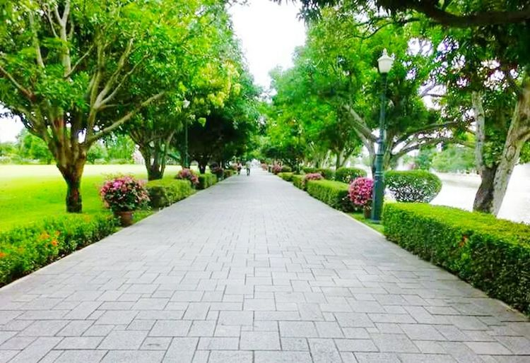 ThailandOnly Thailand🇹🇭 Thailand Love Thailandtrip Thailand Photos Tree The Way Forward Footpath Diminishing Perspective Green Color Outdoors Park - Man Made Space Growth Day Single Lane Road No People Nature Walkway Beauty In Nature Grass Sky City