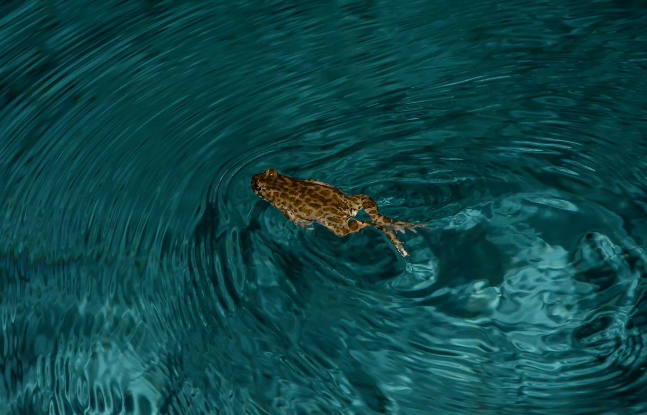 Animal Themes Animal Wildlife Animals In The Wild Nature One Animal Outdoors Swimming Water