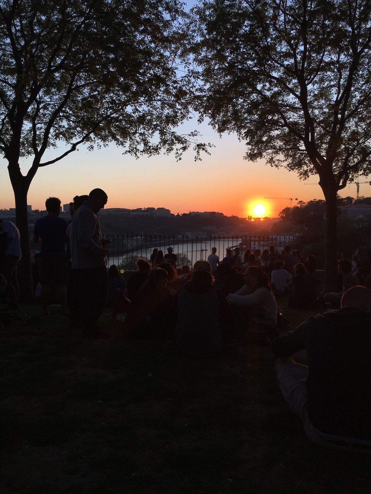 Sunset Large Group Of People Tree Real People Outdoors Douro  Douroriver