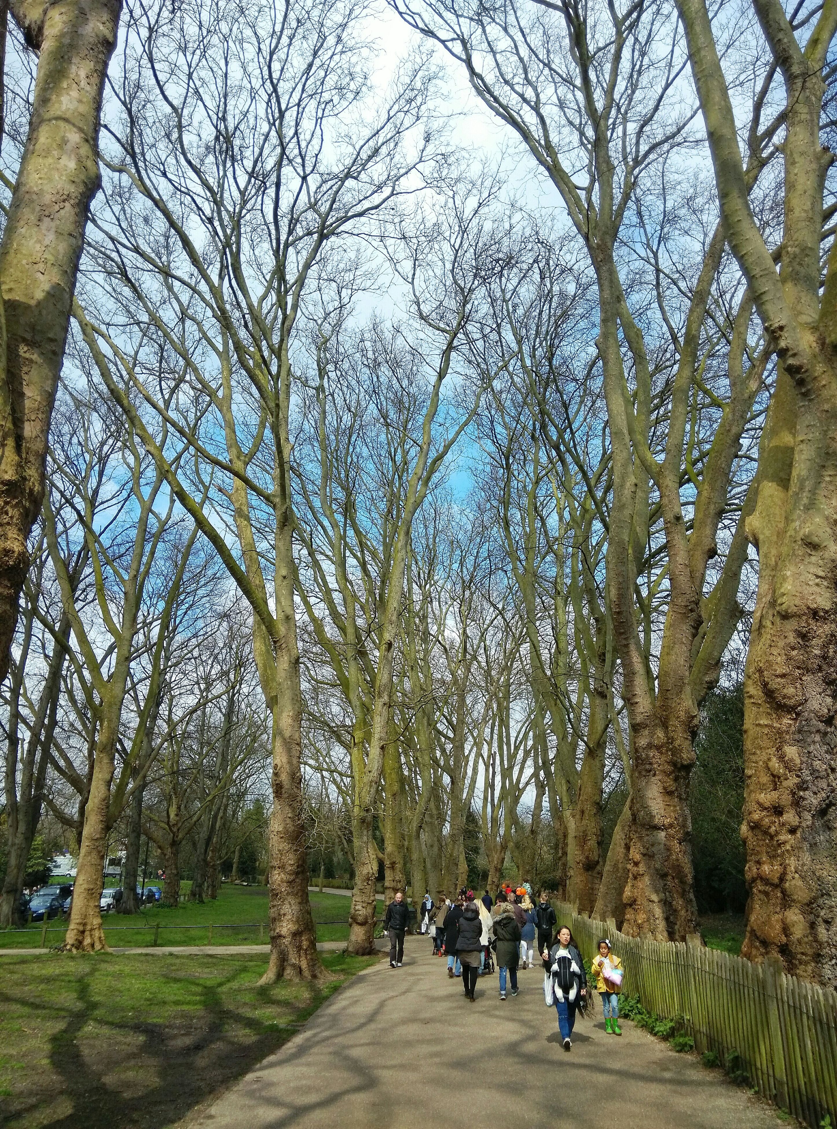 tree, men, lifestyles, person, leisure activity, large group of people, park - man made space, walking, tree trunk, togetherness, branch, the way forward, growth, rear view, group of people, sitting, footpath, medium group of people, full length