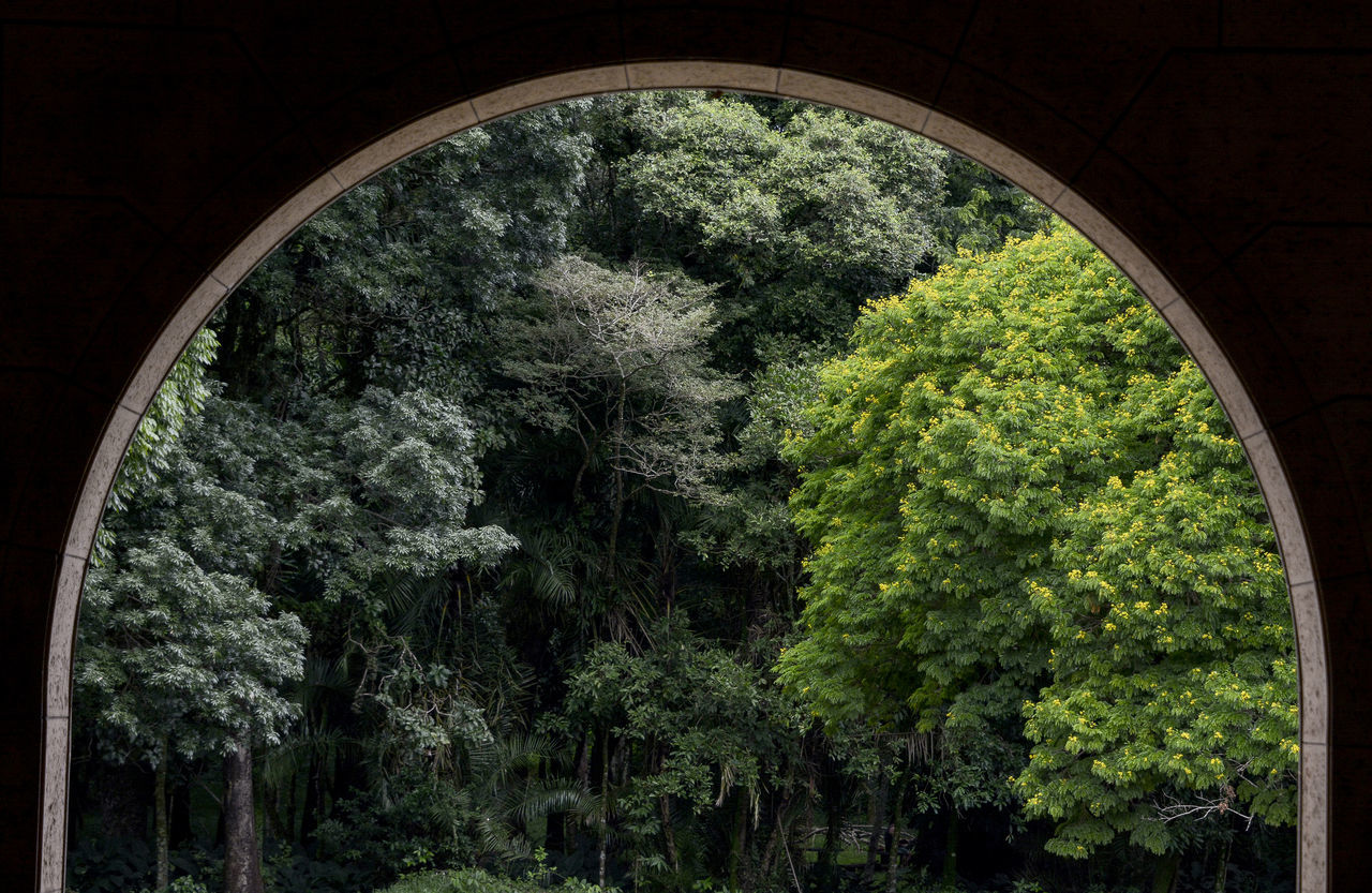 Trees Seen From Arch