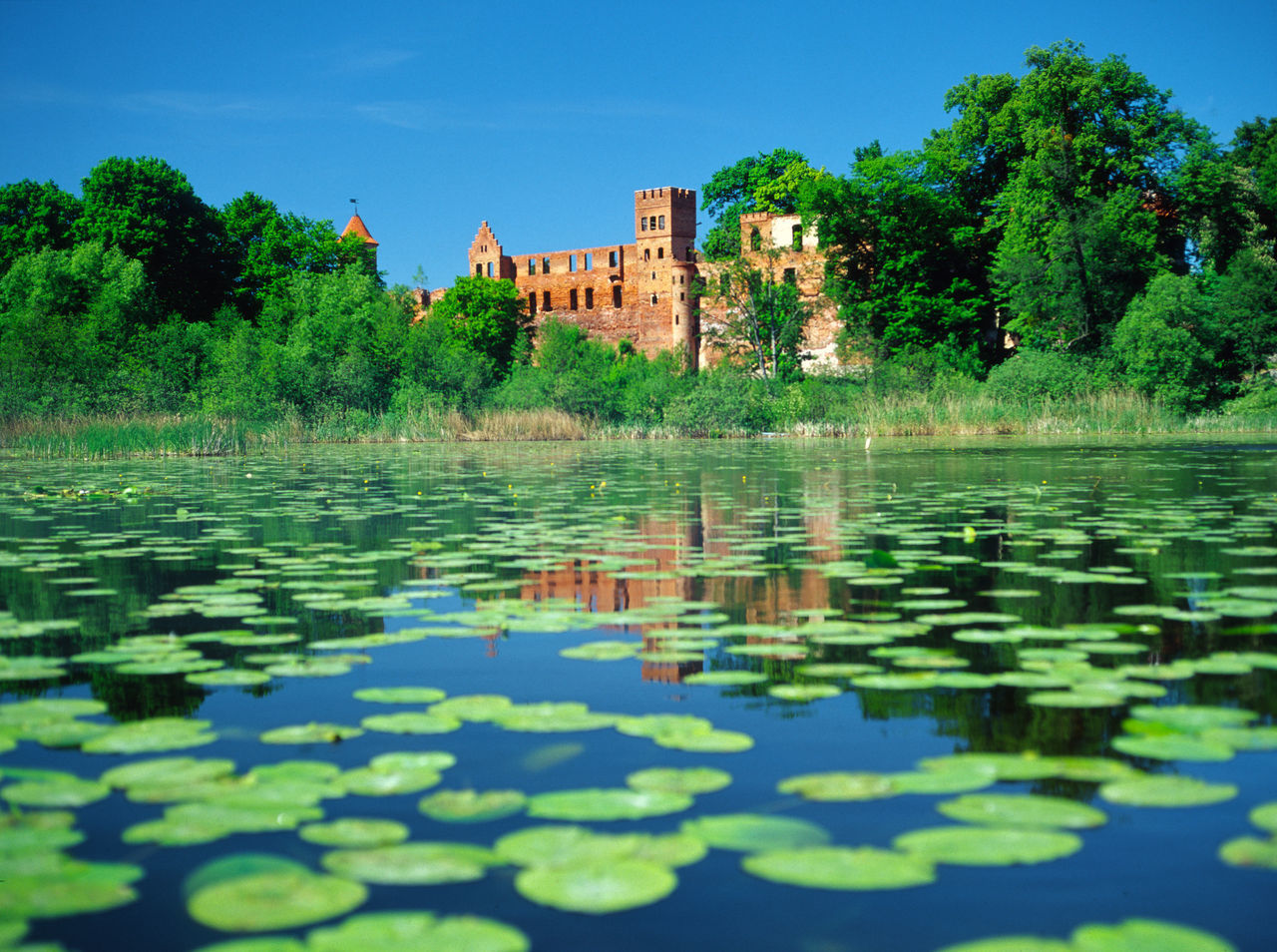Castle Crusaders Day Lake Leaf Leaves Ruin Szymbark Szymbark Teutonic Warmia Warmia Water Water Lily