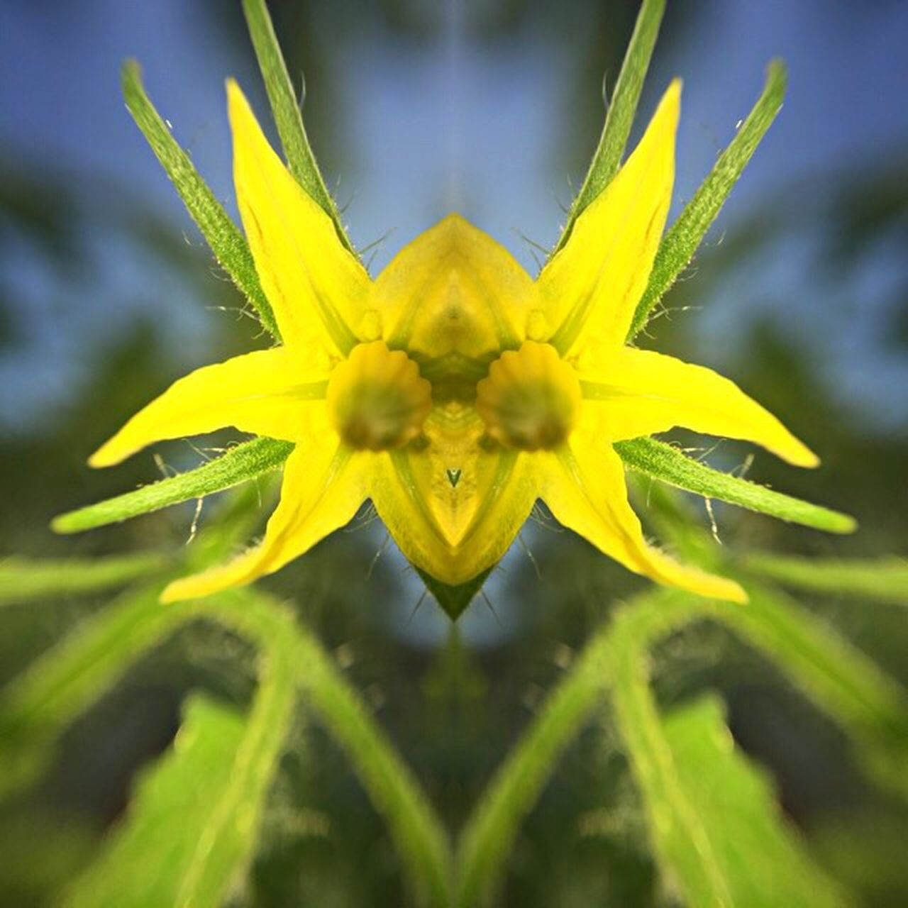flower, nature, plant, fragility, close-up, growth, yellow, beauty in nature, flower head, uncultivated, freshness, outdoors, petal, springtime, alternative medicine, day, green color, summer, no people, sunflower, herbal medicine
