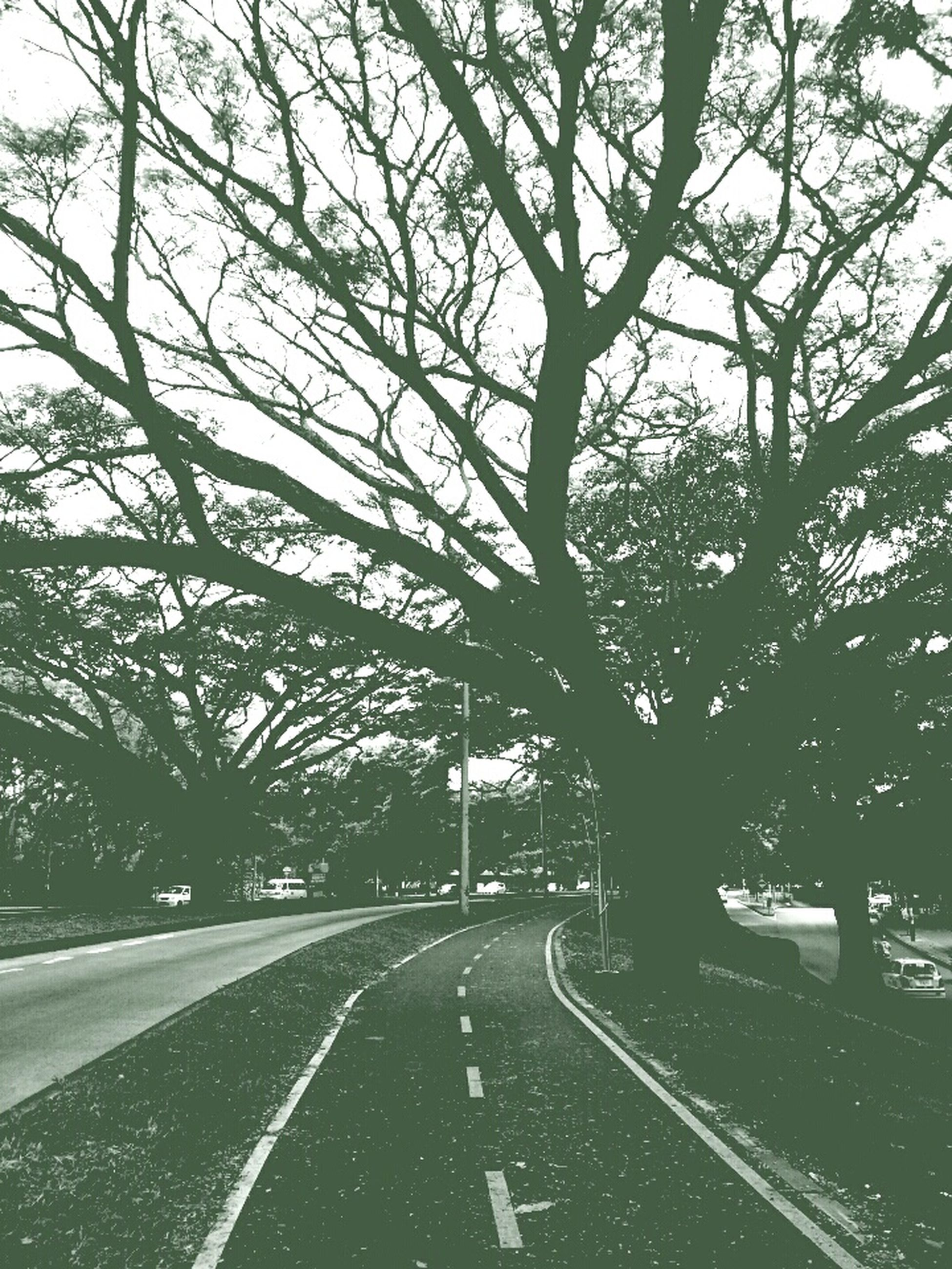 the way forward, road, transportation, tree, road marking, diminishing perspective, vanishing point, empty road, street, tranquility, country road, empty, nature, asphalt, long, no people, tranquil scene, outdoors, treelined, growth