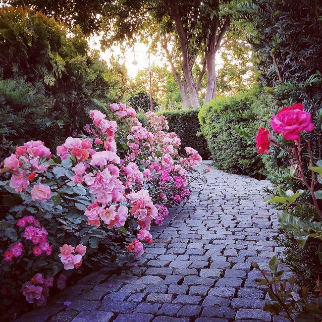 Баку городветров парк Природа сад цветы май2017