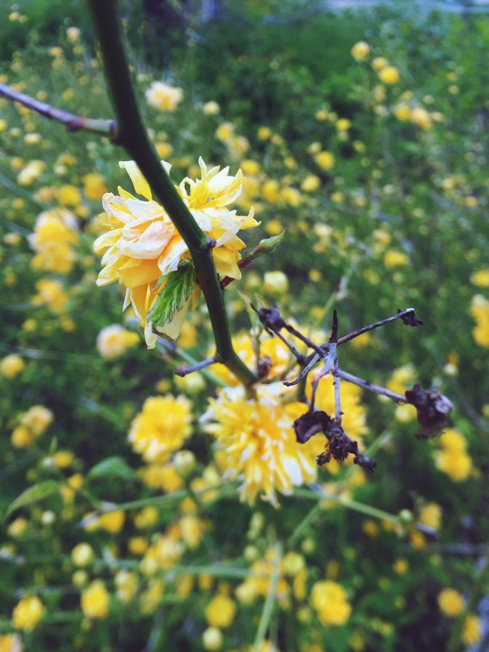 Life and death .... So close together Flower Yellow Fragility Growth Nature Beauty In Nature No People Day Outdoors Flower Head Close-up Focus On Foreground Landscape Freshness Nature Beauty In Nature Life Death Wood - Material Freshness