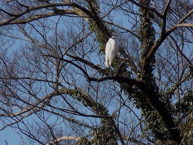 鳥 Birds ダイサギ EyeEm Nature Lover EyeEm Gallery