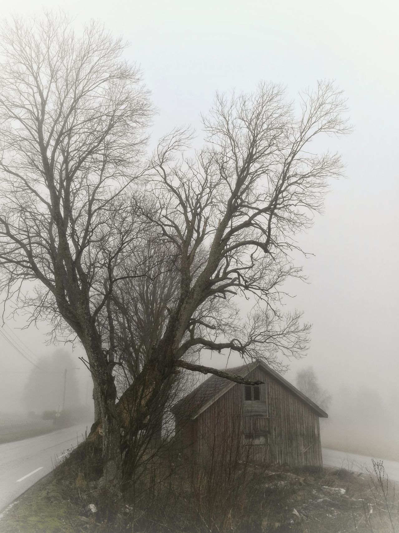 Forgotten between two roads... Tree Bare Tree Nature No People Outdoors Fog Beauty In Nature Old Building  Roads Lifeontheroad Life Is A Journey EyeEmNewHere Huaweiphotography Norway🇳🇴