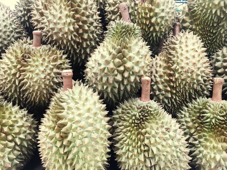 Cactus Thorn Growth Full Frame Spiked Nature Plant Backgrounds Beauty In Nature Front Or Back Yard Danger No People Durian Fruits Green Color Abundance Uncultivated Outdoors Close-up Food Botanical Garden