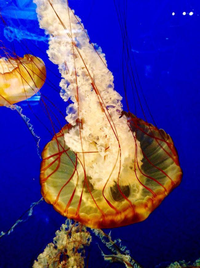 Aquatic Life Vancouver Aquarium