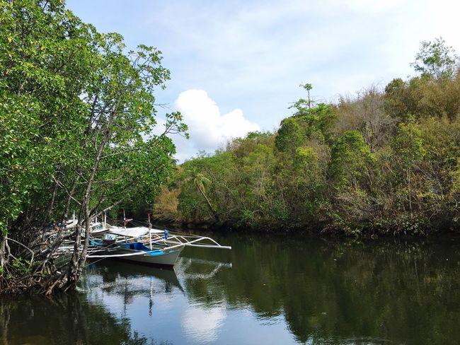 Sicsican Wharf Puerto Princesa City Palawan Philippines Wharf Reflection In The Water Fishing Boat Mangroves