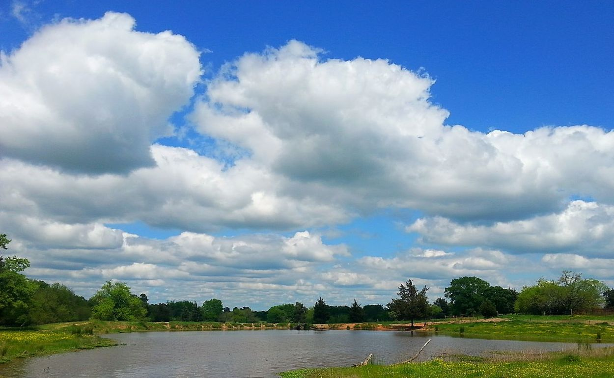 Sunny day in the country. Relaxing Clouds And Sky Ponds Fieldscape Country Life Countryside Blue Sky Flowers, Nature And Beauty Country Fields Enjoying Life Nature_perfection Nature_collection Springtime Nature Naturelovers Nature Photography SPRING LOVIN