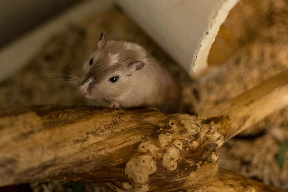 Beautiful stock photos of schnurrbart, Animal Themes, Animal Wildlife, Animals In The Wild, Close-Up