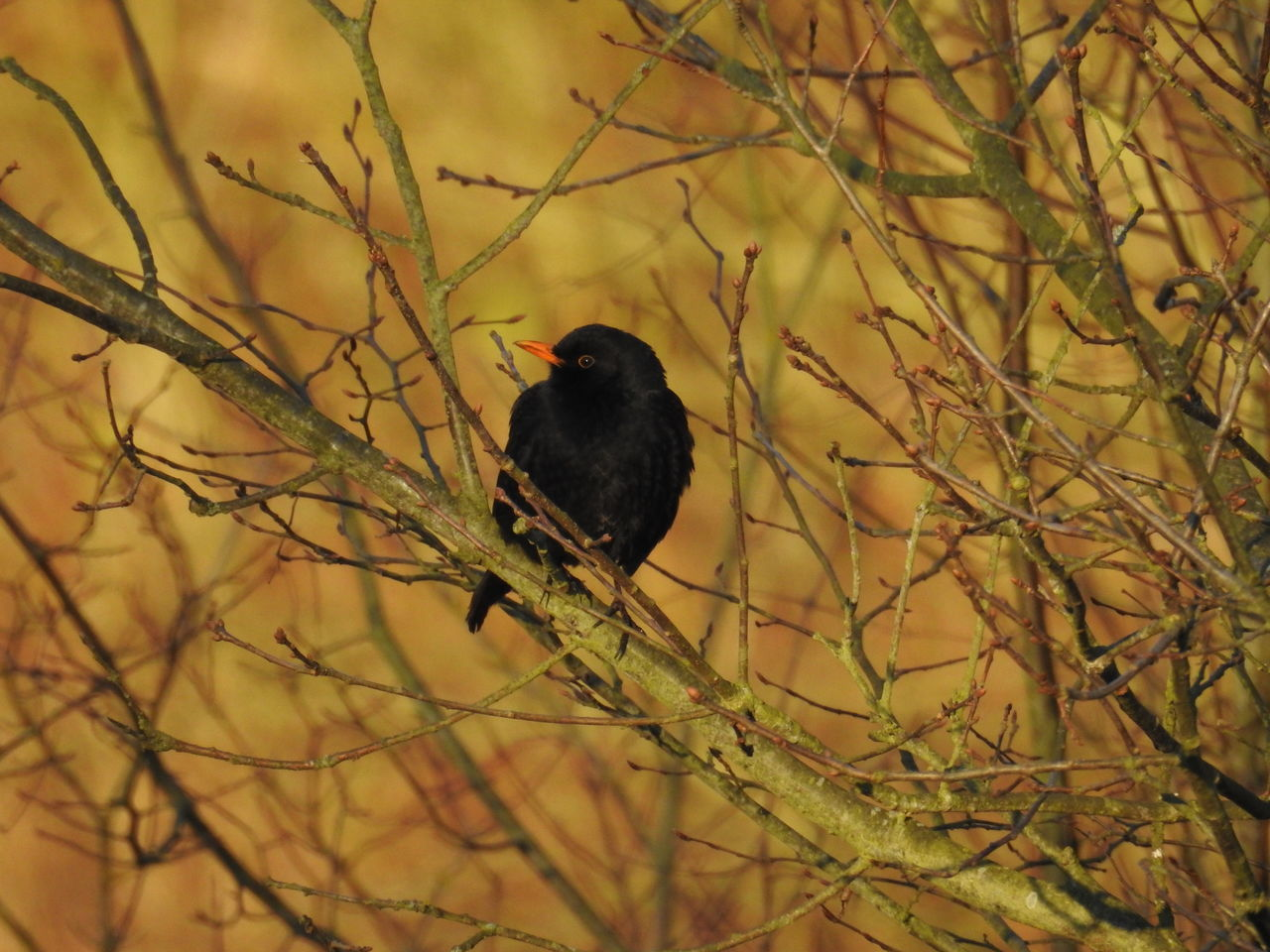 one animal, animals in the wild, animal themes, bird, branch, perching, nature, animal wildlife, bare tree, tree, plant, day, no people, outdoors, beauty in nature, close-up