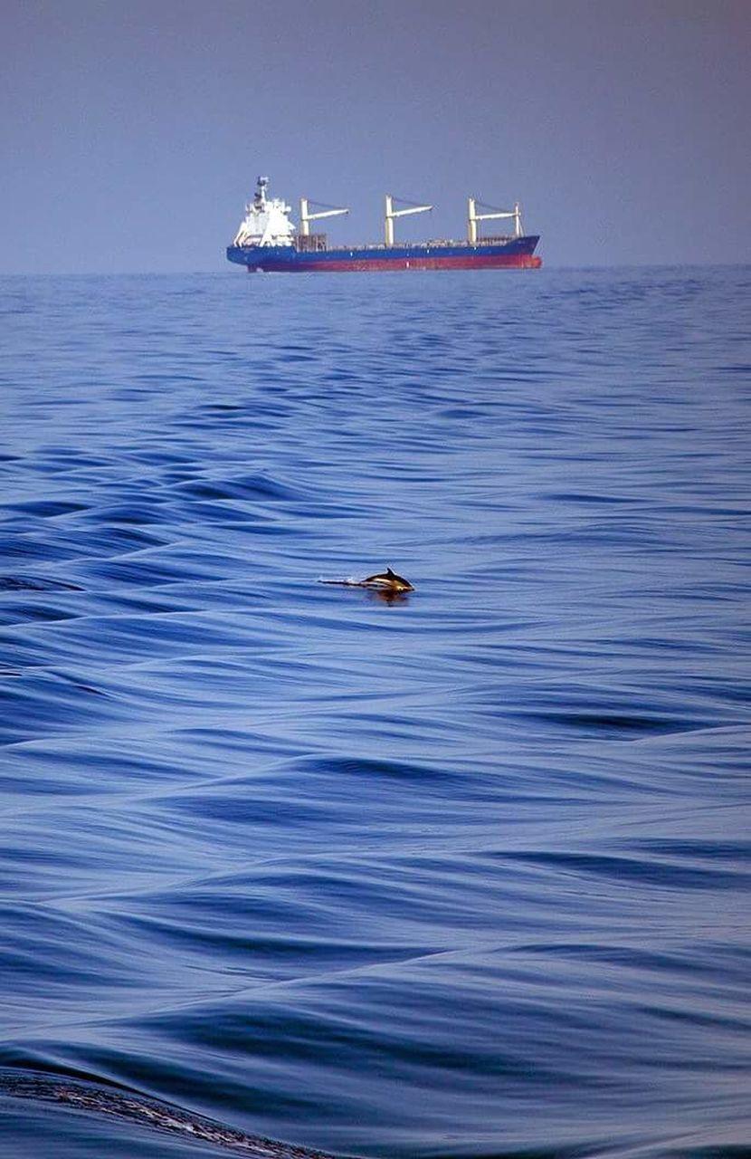 sea, no people, animals in the wild, outdoors, day, nautical vessel, animal wildlife, nature, animal themes, one animal, water, blue, sea life, bird, sky, mammal, oil pump