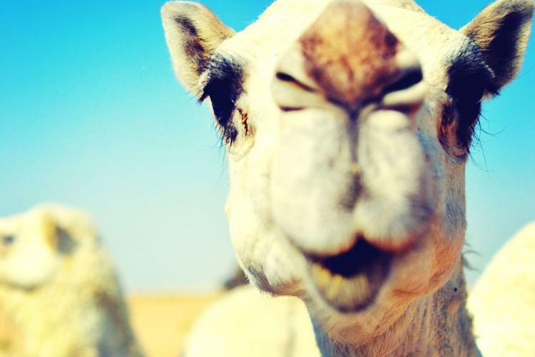 Beautiful Eyes :) Animals Model Whzz Up